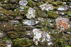 Alte Steinwand mit Blättern und Moos Stockfotografie