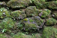 Alte Steinwand mit Blättern und Moos Lizenzfreie Stockfotos