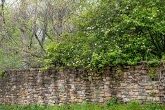 Alte Steinwand mit blühenden Bäumen stockbild