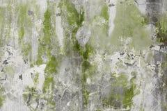 Alte Steinwand mit grünlichem Pflaster Lizenzfreie Stockfotos