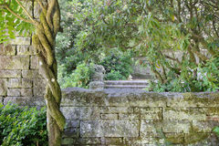 Alte Steinwand-Struktur mit Glyzinie-Rebe Lizenzfreie Stockfotografie