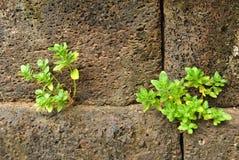 Alte Steinwand und neues Gras Lizenzfreies Stockbild