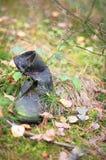 Alte Stiefel im Wald Lizenzfreie Stockbilder