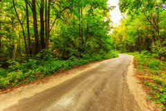Alte Straße im Wald Lizenzfreie Stockfotos