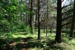 Alte Straße mitten in einem Wald am sonnigen Tag Lizenzfreie Stockbilder