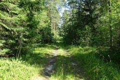 Alte Straße mitten in einem Wald am sonnigen Tag Lizenzfreie Stockfotos