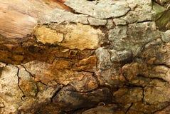 Alte Stumpf Beschaffenheit des Holzes Stockbild