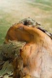Alte Stumpf Beschaffenheit des Holzes Lizenzfreie Stockfotos