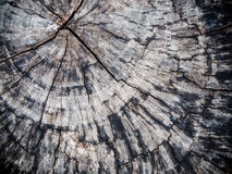 Alte Stumpf Beschaffenheit des Holzes Stockfoto