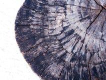 Alte Stumpf Beschaffenheit des Holzes Lizenzfreie Stockbilder