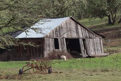 Alte Swayback Scheune und Schafe lizenzfreie stockbilder
