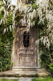 Alte Tür an den Glyzinien Stockfotografie