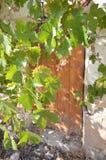 Alte Tür in der Sonnenscheinruine in Spanien Lizenzfreie Stockfotografie