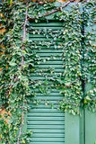 Alte Tür zugeschlossen mit Rebabdeckung die Tür Lizenzfreies Stockbild
