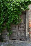 Alte Türen unter dem Baum - hellfarbig Stockbild