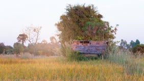 Alte thailändische Hütten mit dem goldenen Reisfeld in Thailand Lizenzfreies Stockfoto