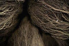 Alte trockene Bäume im mystischen Wald in der Nacht Lizenzfreie Stockfotografie