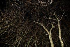 Alte trockene Bäume im mystischen Wald des Herbstes in der Nacht Lizenzfreies Stockbild