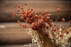 Alte trockene Blumen, getrocknetes krautartiges Reedgras Stockfoto