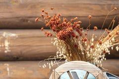 Alte trockene Blumen, getrocknetes krautartiges Reedgras Stockfotos