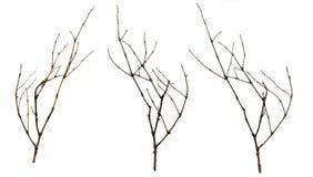 Alte trockene Niederlassungen Brombeere, Kranke und Zweige, hölzernes Bündel isolat Stockfotografie