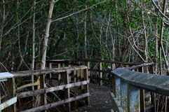 Alte tropische Promenade Lizenzfreies Stockfoto