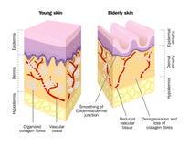 Alte und junge Haut lizenzfreie abbildung