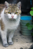 Alte und schmutzige Katze Lizenzfreie Stockfotografie