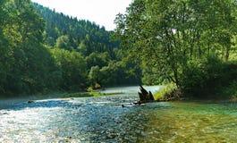 Alte verfallene Verdammung im Fluss, der entlang das Waldland fließt Lizenzfreie Stockfotos