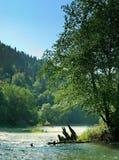Alte verfallene Verdammung im Fluss, der entlang das Waldland fließt Lizenzfreie Stockbilder