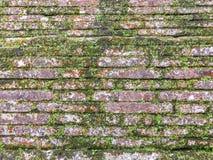 Alte alte verlassene Backsteinmauer bedeckt mit grünem Moos und Efeu Lizenzfreie Stockbilder