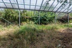 alte verlassene Gartenarbeit Lizenzfreies Stockbild