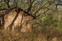 Alte verlassene Halle zwischen dem überwucherten Olivenhain in Korfu-Insel Griechenland Stockfoto