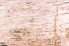 Alte verrostete Baumrinde, organische Beschaffenheit Lizenzfreie Stockbilder