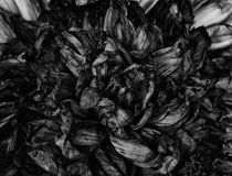 Alte verwelkte Blumen Stockfotos