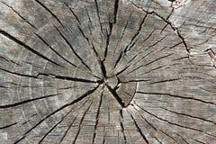 Alte verwitterte Baum-Stamm-Beschaffenheit Stockfotos