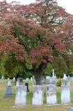 Alte, verwitterte Finanzanzeigen im Friedhof mit Schatten des Falles verzweigt sich auf Baum Lizenzfreie Stockfotos