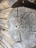 Alte verwitterte hölzerne Beschaffenheit der Baumringe Stockbilder