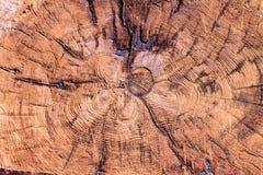 Alte verwitterte hölzerne Beschaffenheit der Baumringe Lizenzfreies Stockbild