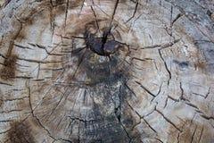 Alte verwitterte hölzerne Beschaffenheit der Baumringe mit dem Querschnitt Stockfotos