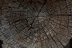 Alte verwitterte hölzerne Beschaffenheit der Baumringe mit dem Querschnitt von Stockfotos