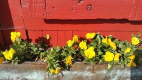 Alte verwitterte rote Wand mit hellen gelben Blumen Lizenzfreie Stockbilder