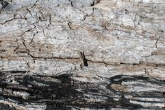 Alte verwitterte Schmutzholzoberfläche Stockbilder