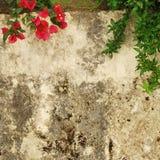 Alte verwitterte und schmutzige Wand mit Blumen Stockfotos