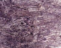 Alte violette getonte Baumschnittbeschaffenheit Stockbilder