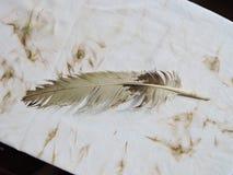 Alte Vogelfeder Stockfoto