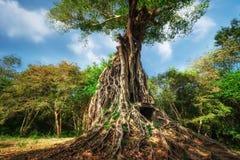 Alte vor Tempelruinen Angkor Sambor Prei Kuk kambodscha Lizenzfreie Stockbilder