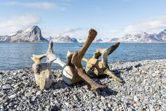 Alte Walknochen auf der Küste von Spitzbergen, arktisch Stockfoto