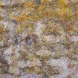 Alte Wand bedeckt mit Flechte Lizenzfreie Stockfotos