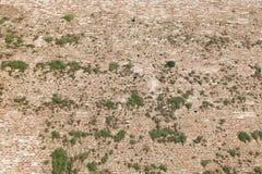 Alte Wand des roten Backsteins mit grünem Gras der Vegetation Lizenzfreie Stockfotografie